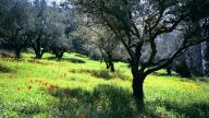 mount_of_olives